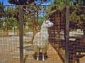Aserbaidschan. Baku - Zoo