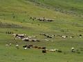 Unterwegs von Dogubayazit nach Van - Nordostanatolien
